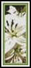White Lilies Photo Bookmark - Cross Stitch Chart