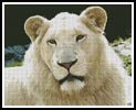White Lion - Cross Stitch Chart