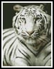 White Tiger - Cross Stitch Chart