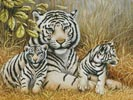 White Tiger and Cubs - Cross Stitch Chart
