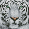 White Tiger Close Up - Cross Stitch Chart