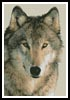 Wolf 3 - Cross Stitch Chart