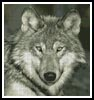 Wolf Close Up - Cross Stitch Chart
