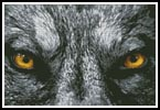 Wolf Eyes - Cross Stitch Chart