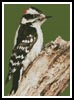 Woodpecker - Cross Stitch Chart