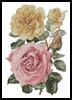 Yellow and Pink Roses - Cross Stitch Chart