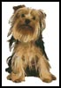 Yorkshire Terrier - Cross Stitch Chart
